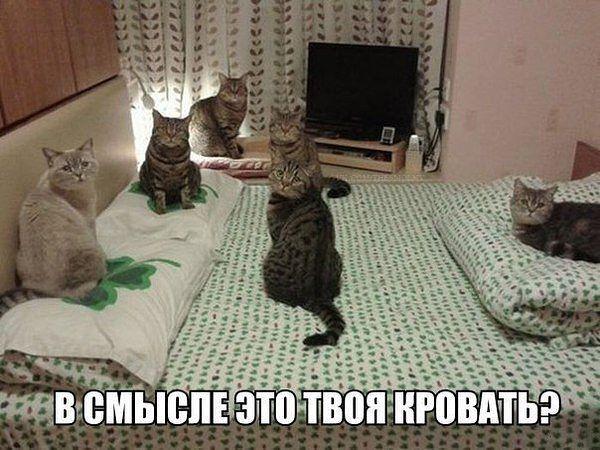http://sh.uploads.ru/1ZFEN.jpg
