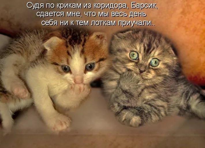 http://sh.uploads.ru/1ZFeq.jpg