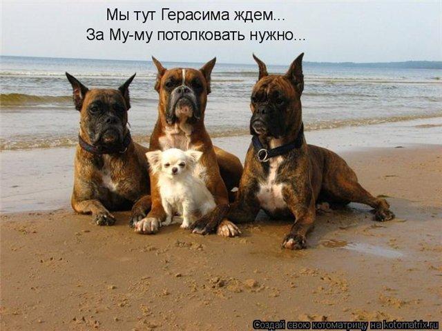http://sh.uploads.ru/5A9mF.jpg
