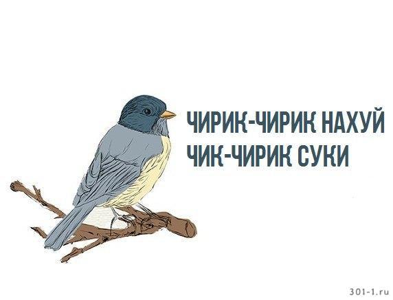 http://sh.uploads.ru/7b36R.jpg