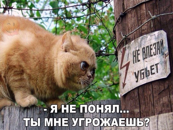 http://sh.uploads.ru/8aCmq.jpg