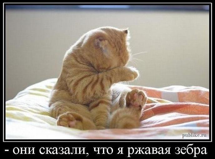 http://sh.uploads.ru/AgwZi.jpg