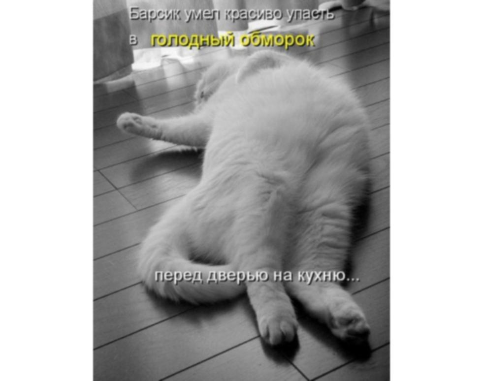 http://sh.uploads.ru/COP1y.jpg