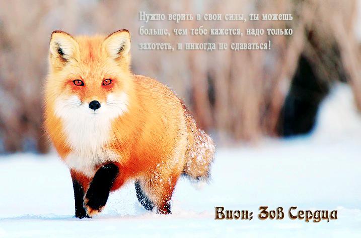 http://sh.uploads.ru/DuZ07.png