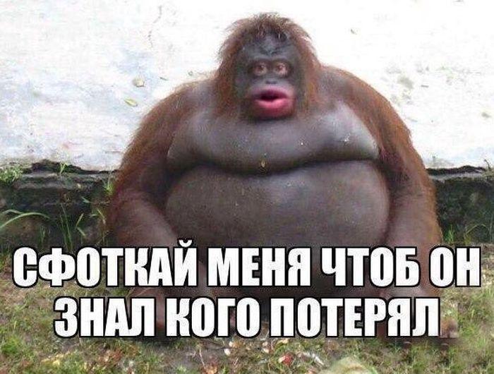 http://sh.uploads.ru/HaucL.jpg