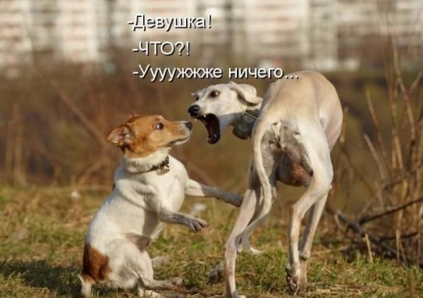 http://sh.uploads.ru/LclGX.jpg