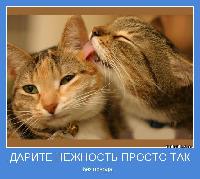 http://sh.uploads.ru/Mw9ku.jpg