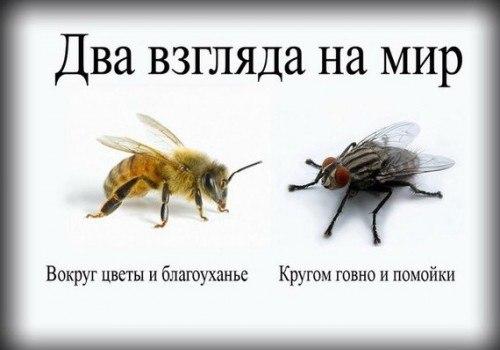 http://sh.uploads.ru/PTLhQ.jpg