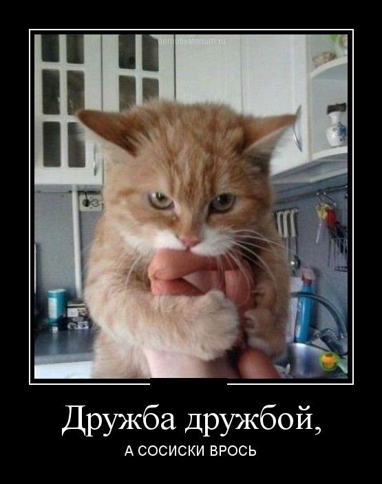 http://sh.uploads.ru/XENRc.jpg