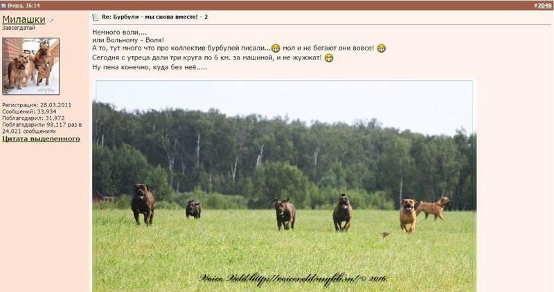 http://sh.uploads.ru/fFdr1.jpg