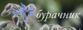 http://sh.uploads.ru/fs2zk.jpg