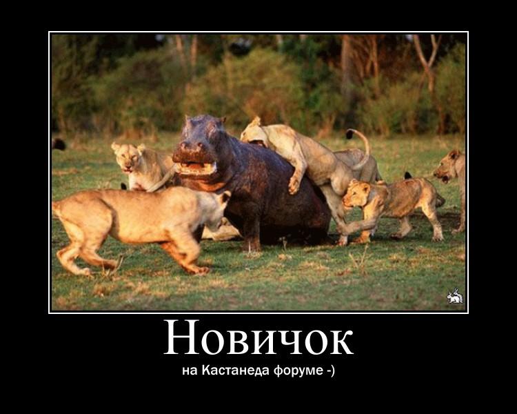 http://sh.uploads.ru/kpmlF.jpg