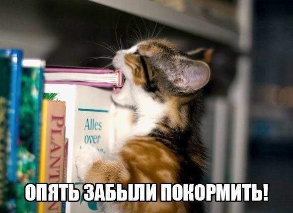 http://sh.uploads.ru/lGT8i.jpg