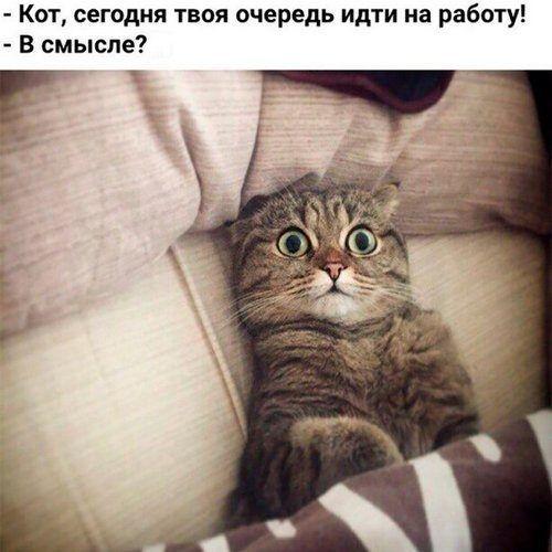 http://sh.uploads.ru/nkeP6.jpg