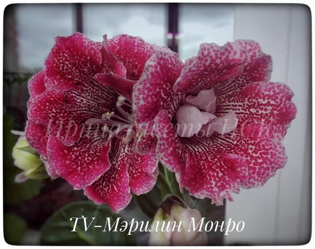 http://sh.uploads.ru/qYyNx.jpg