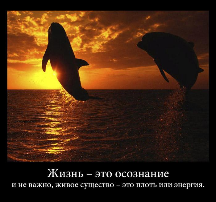 http://sh.uploads.ru/risXZ.jpg