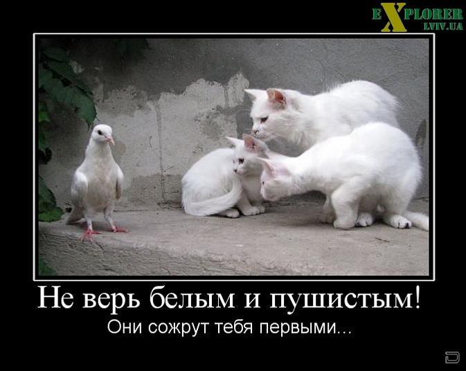http://sh.uploads.ru/svVUB.jpg