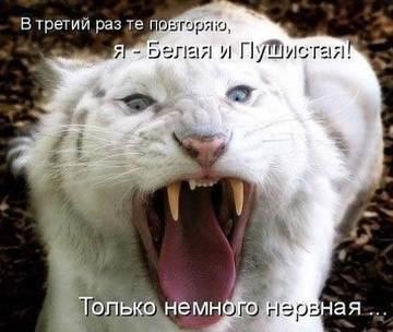 http://sh.uploads.ru/t/1VgwX.jpg