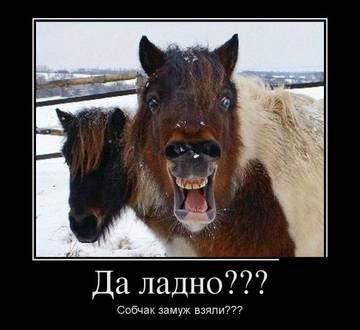 http://sh.uploads.ru/t/1hasv.jpg