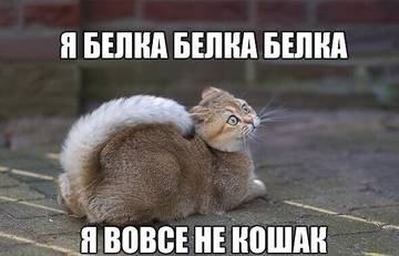 http://sh.uploads.ru/t/1mN5w.jpg