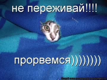 http://sh.uploads.ru/t/3FrmS.jpg