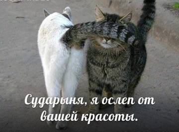 http://sh.uploads.ru/t/42yIi.jpg