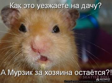 http://sh.uploads.ru/t/4NjxC.jpg