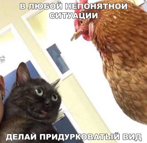 http://sh.uploads.ru/t/4xjqR.jpg