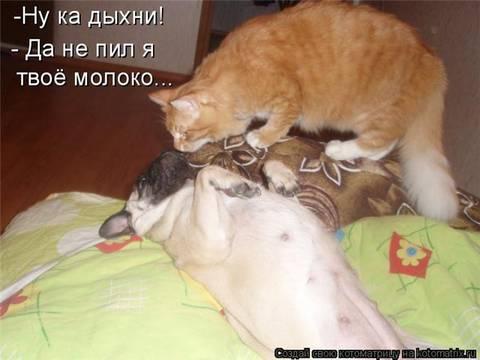 http://sh.uploads.ru/t/503Jd.jpg