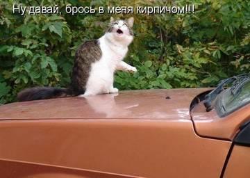 http://sh.uploads.ru/t/5f39K.jpg