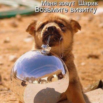 http://sh.uploads.ru/t/78SZ3.jpg