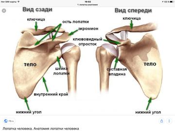 http://sh.uploads.ru/t/78iUD.png