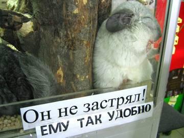http://sh.uploads.ru/t/7aAcP.jpg