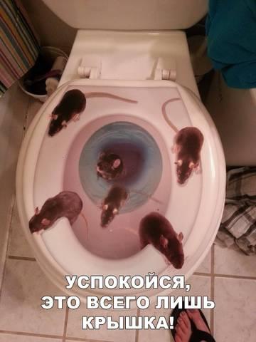 http://sh.uploads.ru/t/7eYnk.jpg