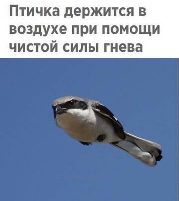 http://sh.uploads.ru/t/7vLZa.jpg