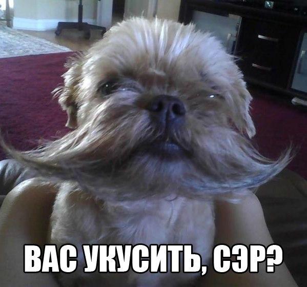 http://sh.uploads.ru/t/7zkxs.jpg