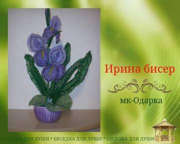 http://sh.uploads.ru/t/8GT1L.jpg