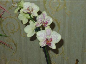 http://sh.uploads.ru/t/8HUqS.jpg