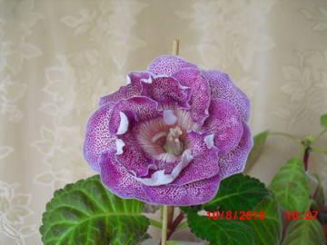 http://sh.uploads.ru/t/8SMlg.jpg