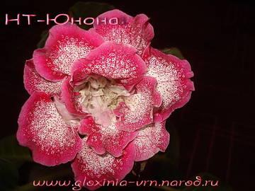http://sh.uploads.ru/t/8Y2kR.jpg