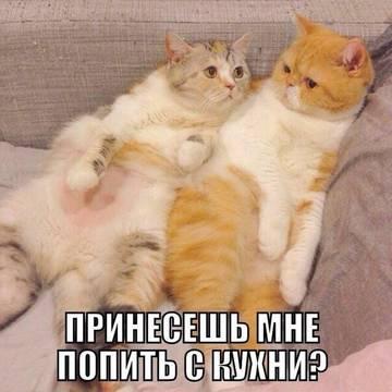http://sh.uploads.ru/t/8cyHf.jpg