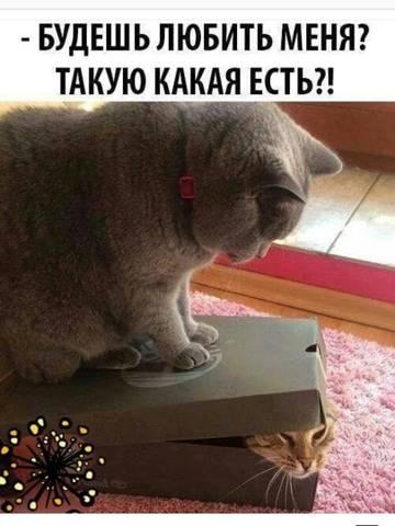http://sh.uploads.ru/t/9fWCP.jpg