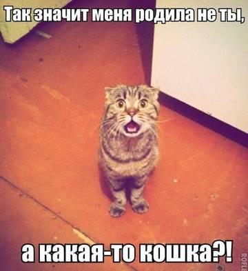 http://sh.uploads.ru/t/9lWvK.jpg