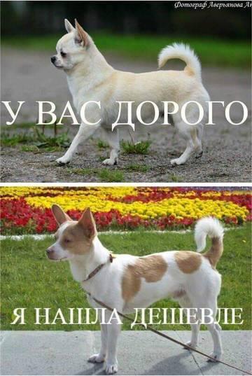 http://sh.uploads.ru/t/B7VMQ.jpg