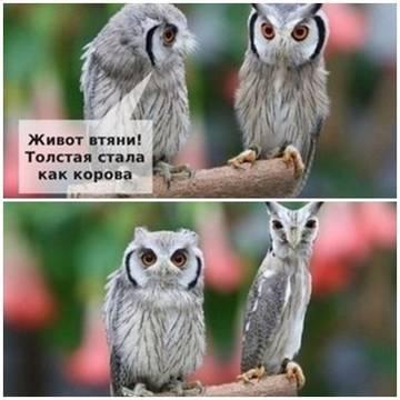 http://sh.uploads.ru/t/BkPqR.jpg