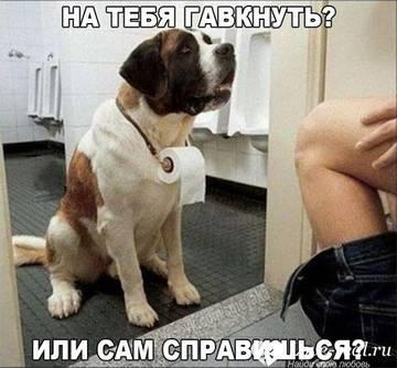http://sh.uploads.ru/t/BoryI.jpg