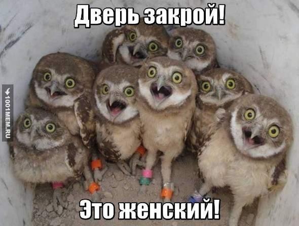 http://sh.uploads.ru/t/COcZ4.jpg