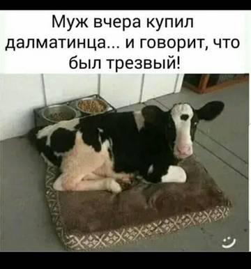 http://sh.uploads.ru/t/CfHS3.jpg