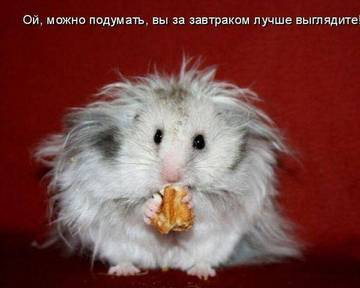 http://sh.uploads.ru/t/E2JnP.jpg