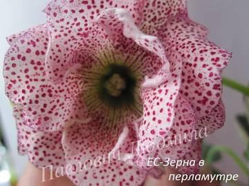 http://sh.uploads.ru/t/ErQXi.jpg